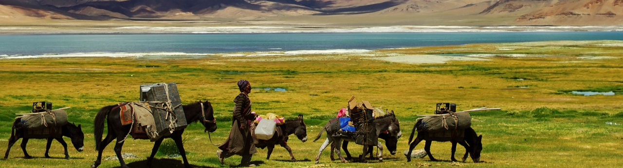 trekking in laddakh